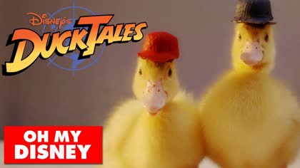 Duck Tales With Real Ducks