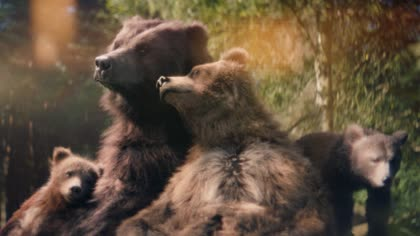 The Center Parcs: Bears