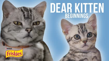 Zefrank: Dear Kitten, Beginning