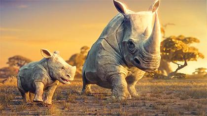 Wildlife Conservation Film Festival: Dream