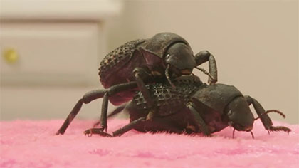 NSFW: Top 20 Bug Porn Sex Acts