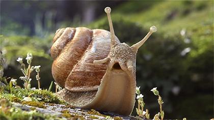 Testimony Of A Snail