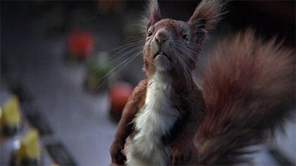 Commercial: Squirrel