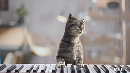 Chocofresh: Piano Cat