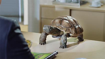 I Speak Turtle